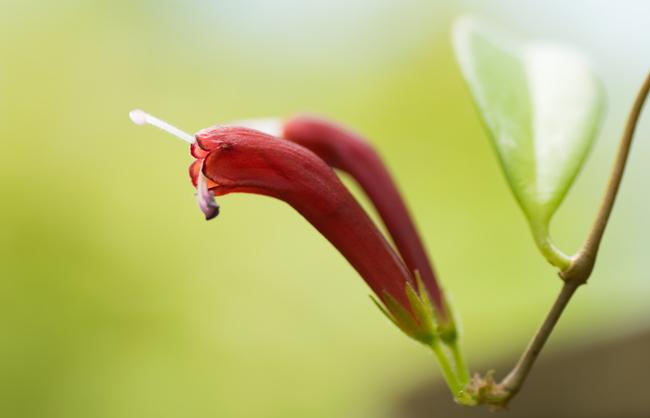 5 Most Beautiful Myanmar Flowers