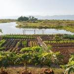 sanctum-inle-resort-garden